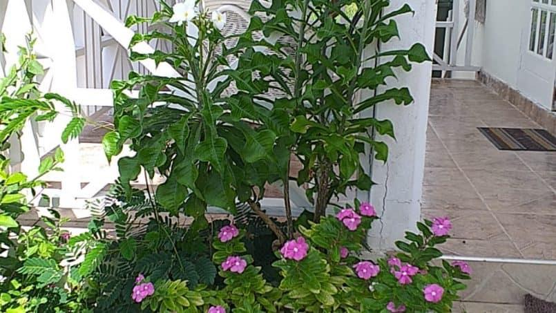Garden Sea Coast Villa Barbados